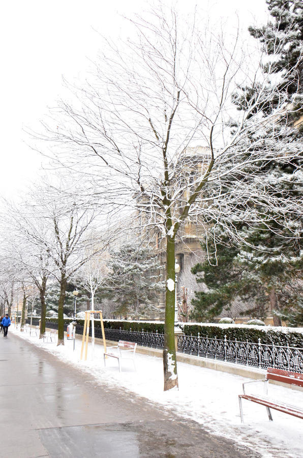 Árboles nevados fotos de archivo