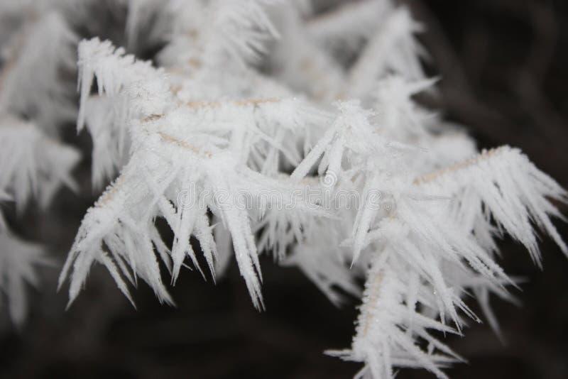 Árboles nevados en el desierto imágenes de archivo libres de regalías