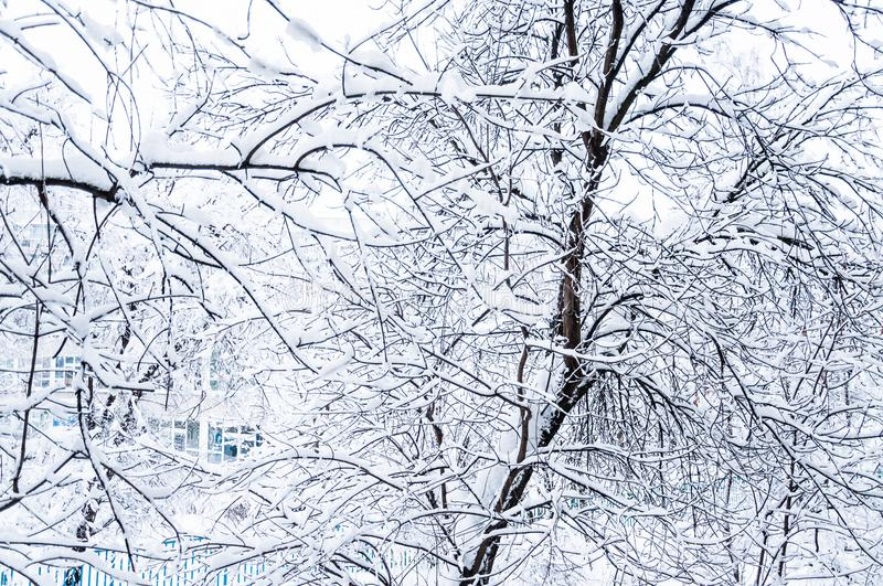 Árboles nevados en la ciudad La visión desde la ventana durante nevadas pesadas foto de archivo libre de regalías