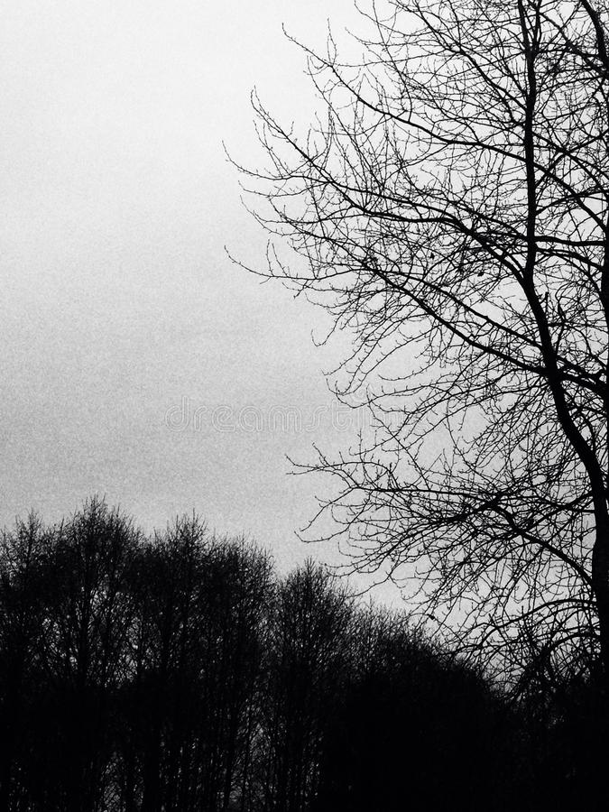 Árboles oscuros fotografía de archivo