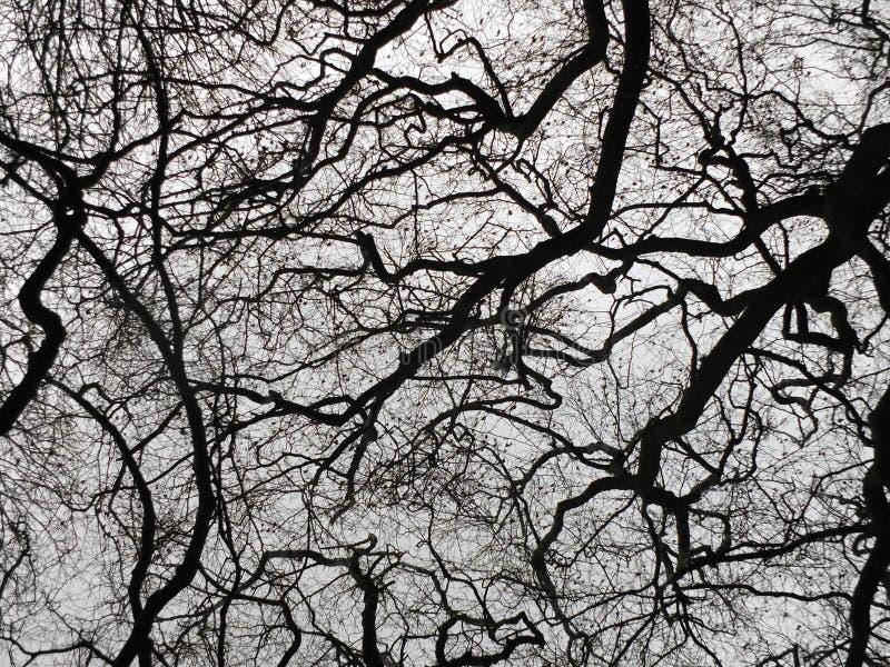 Árboles oscuros del invierno y ramas desnudas rígidas en silueta foto de archivo