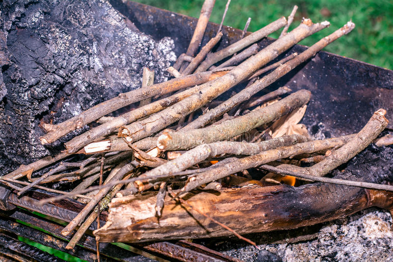 Árboles para la leña en el bosque que hace la barbacoa entre la naturaleza imagenes de archivo