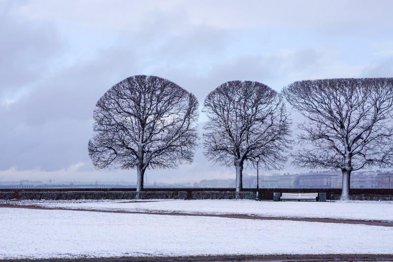 Árboles perfectos en la primavera, perfeccionismo, simetría imágenes de archivo libres de regalías