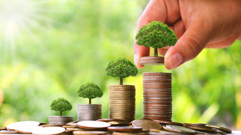 Árboles que crecen en monedas en los niveles crecientes y los conceptos financieros imagen de archivo
