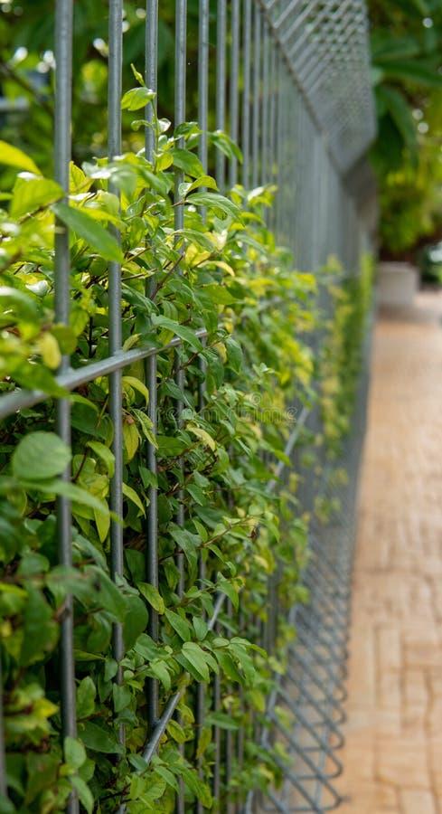 Árboles que crecen a lo largo de la cerca de la malla al lado del sendero, ladrillos anaranjados de Mok del bloque imágenes de archivo libres de regalías