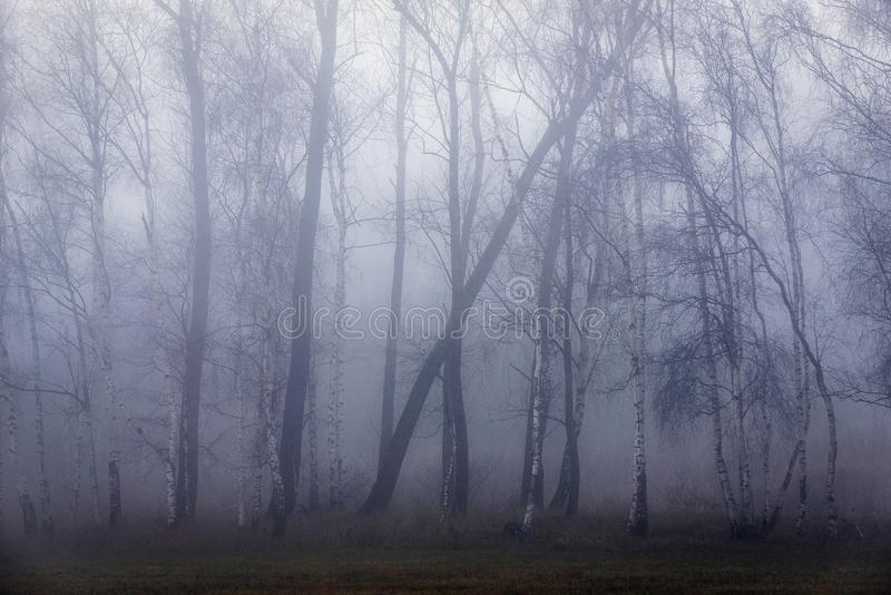 Árboles que doblan el viento en una niebla frecuentada fotos de archivo libres de regalías