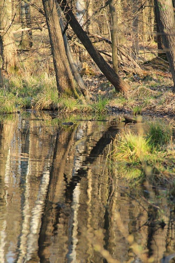 Árboles que reflejan en el agua fotografía de archivo