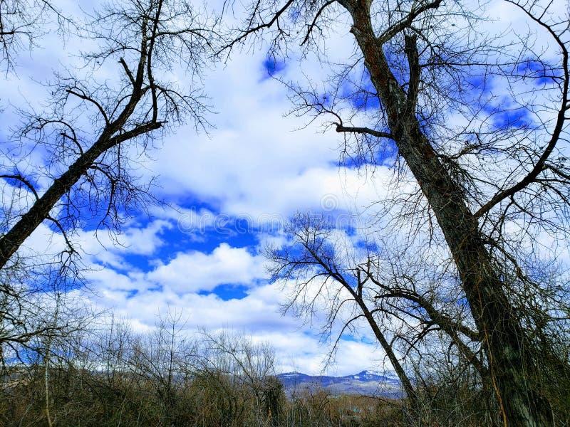 Árboles que se elevan contra un cielo nublado azul imagen de archivo libre de regalías