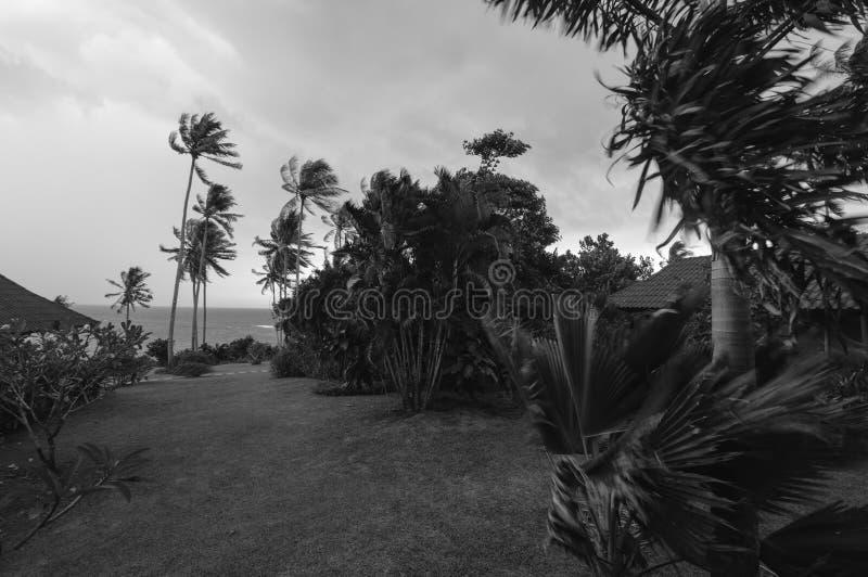 Árboles que soplan cerca del mar en un día ventoso, blanco y negro imagen de archivo