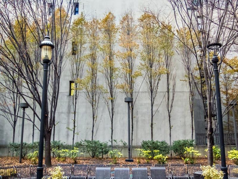 Árboles rígidos en el parque foto de archivo libre de regalías