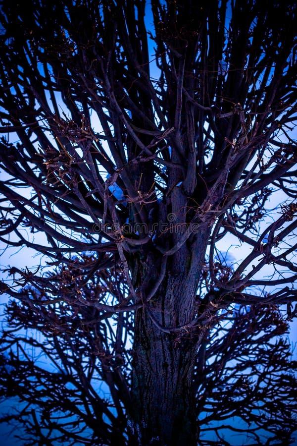 Árboles ramificados en el parque, puesta del sol, invierno imagen de archivo libre de regalías