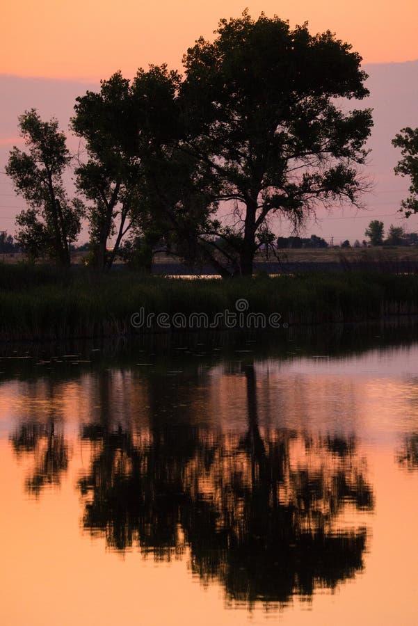 Árboles reflectores en una charca fotos de archivo