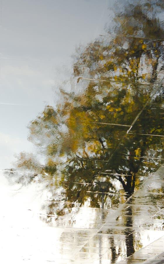 Árboles reflejados en un charco imagen de archivo libre de regalías