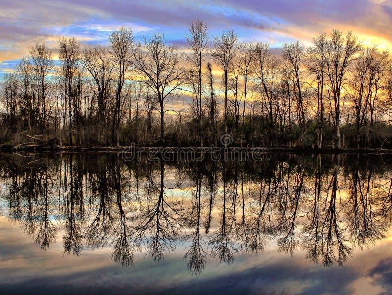Árboles reflexivos en la oscuridad imagen de archivo libre de regalías
