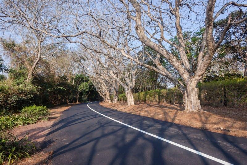 Árboles residenciales del camino escénico fotografía de archivo libre de regalías