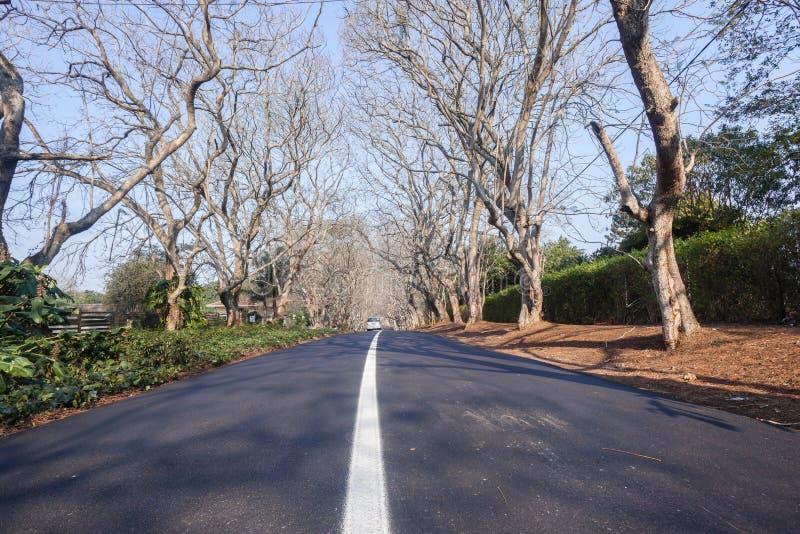 Árboles residenciales del camino escénico fotografía de archivo