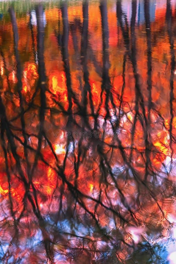 Árboles rojos brillantes con las hojas en otoño en agua, reflexiones brillantes en agua imagen de archivo
