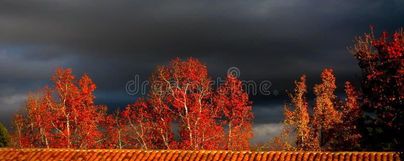 Árboles rojos de la caída con el cielo negro fotografía de archivo libre de regalías