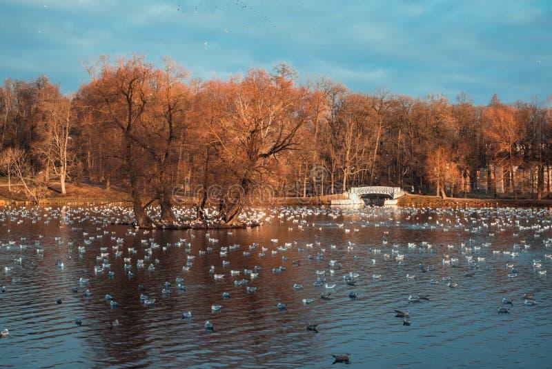 Árboles rojos en la charca con los pájaros en el otoño fotos de archivo