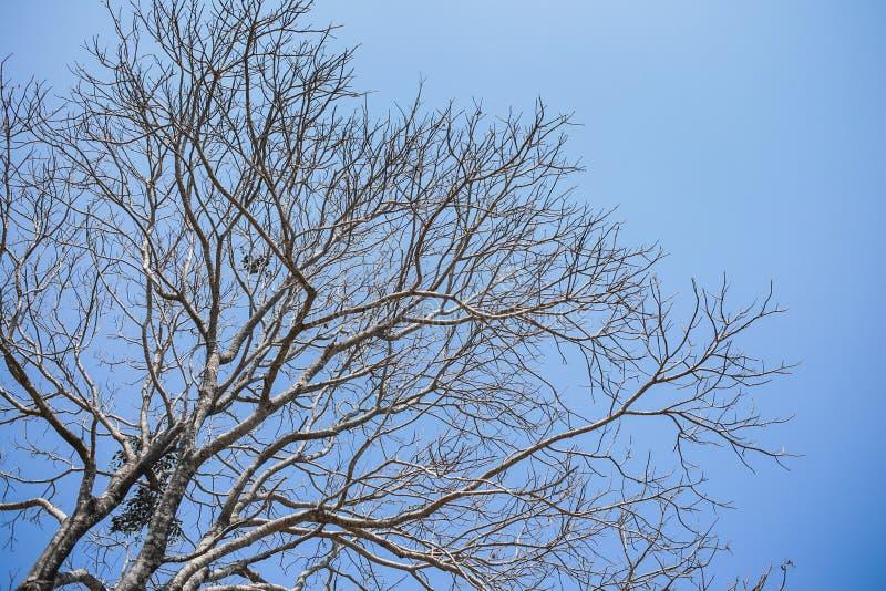 Árboles secos hermosos con los cielos naturales ?l mejor para creativo, el papel pintado, y el extracto foto de archivo