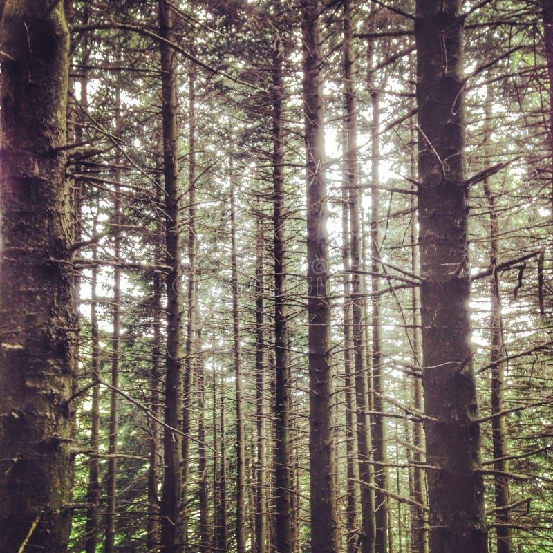Árboles silenciosos imagen de archivo