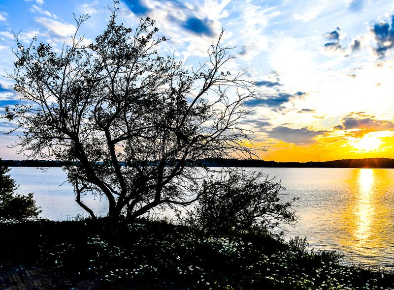 Árboles silueteados en la puesta del sol fotografía de archivo libre de regalías