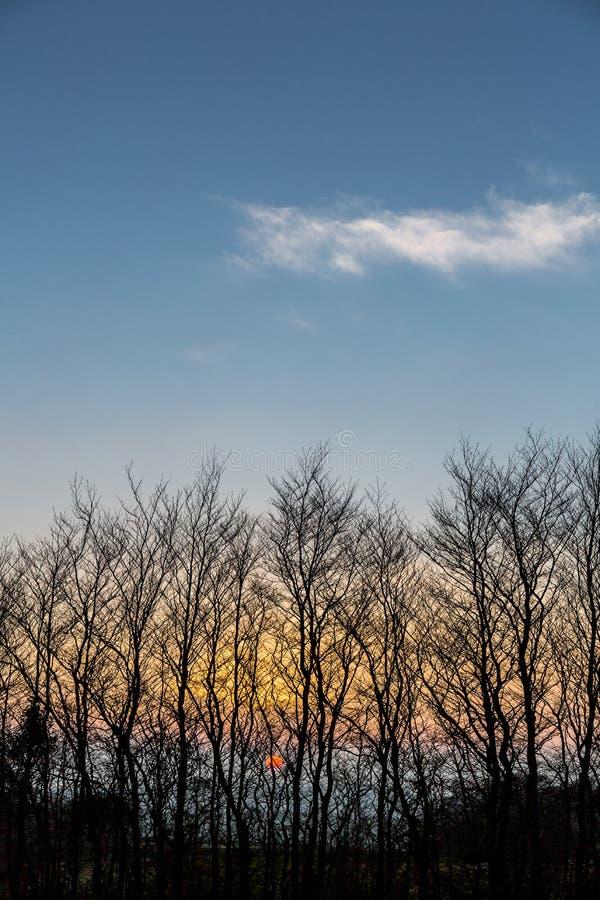 Árboles silueteados en la puesta del sol en Dartmoor, Devon, Reino Unido foto de archivo libre de regalías