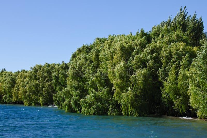 Árboles silvestres a lo largo del lago en Chile imagen de archivo