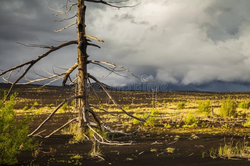 Árboles sin vida en el bosque muerto imagen de archivo