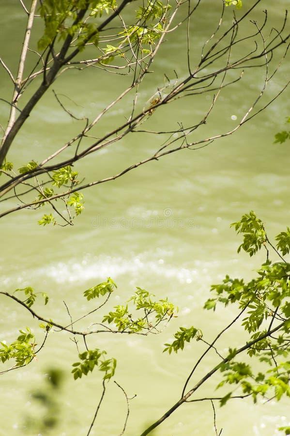 Árboles sobre el río de Cerna imagenes de archivo