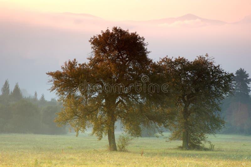 Árboles solos foto de archivo