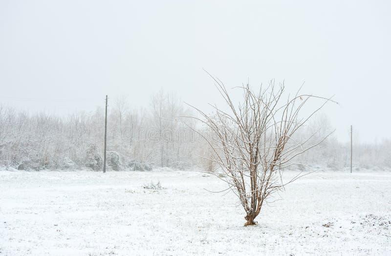 Árboles solos congelados en el parque o el bosque con nieve e hielo en el día de invierno brumoso frío imagen de archivo libre de regalías