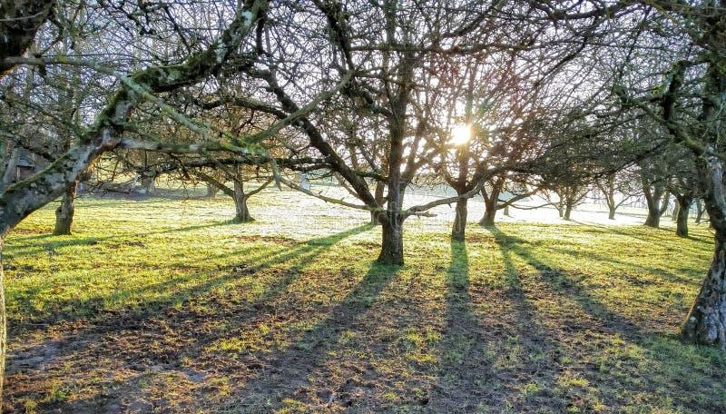 Árboles sombras imágenes de archivo libres de regalías