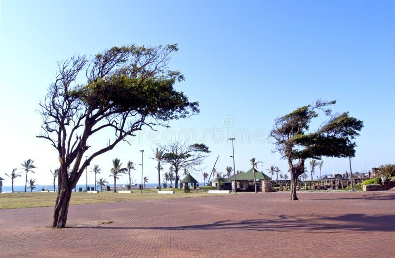 Árboles soplados viento en calzada en la milla de oro de Durban imagen de archivo libre de regalías