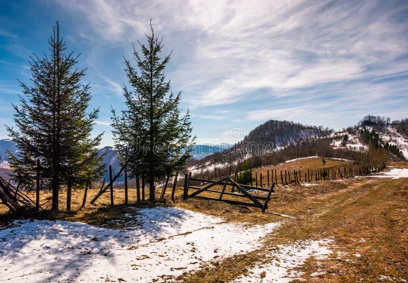 Árboles Spruce cerca de la cerca en la ladera foto de archivo libre de regalías