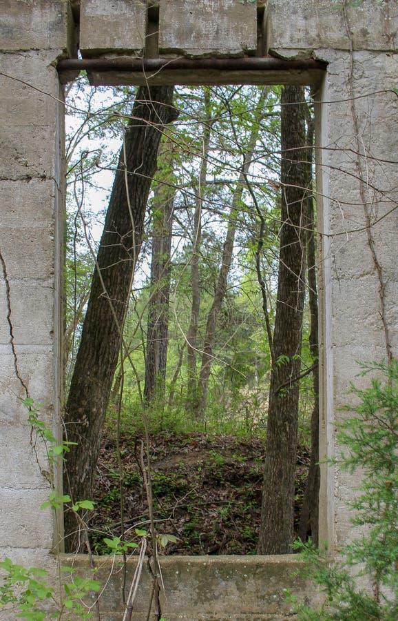 Árboles a través de una puerta de una casa abandonada fotografía de archivo