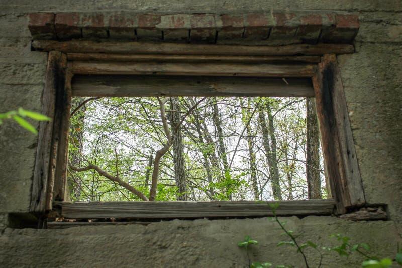 Árboles a través de una ventana de una casa abandonada imagen de archivo