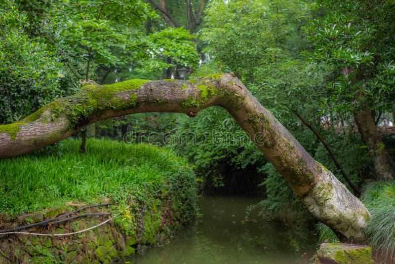 Árboles, trayectorias y calas en un parque en Wenzhou en China - 2 fotos de archivo libres de regalías