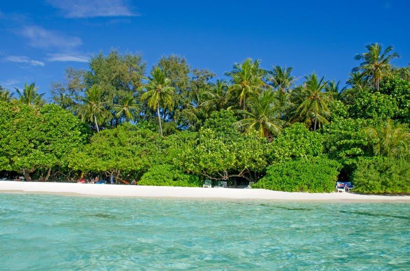 Árboles tropicales del paisaje contra la perspectiva del agua de la turquesa del océano imágenes de archivo libres de regalías