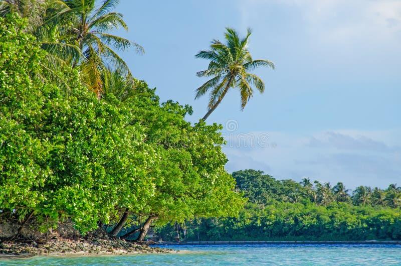 Árboles tropicales del paisaje contra la perspectiva del agua de la turquesa del océano fotografía de archivo libre de regalías