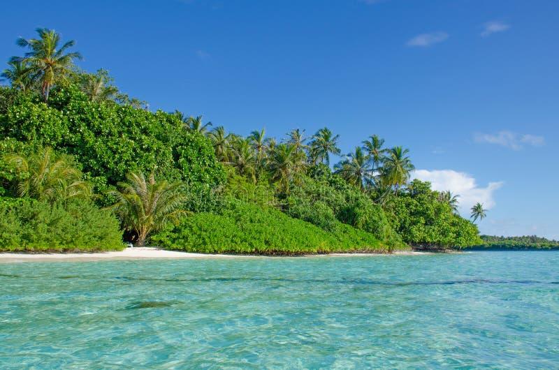 Árboles tropicales del paisaje contra la perspectiva del agua de la turquesa del océano fotos de archivo libres de regalías