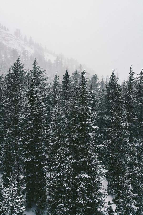 Árboles ventosos fotografía de archivo libre de regalías