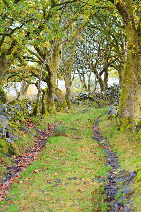 Árboles verdes fotografía de archivo