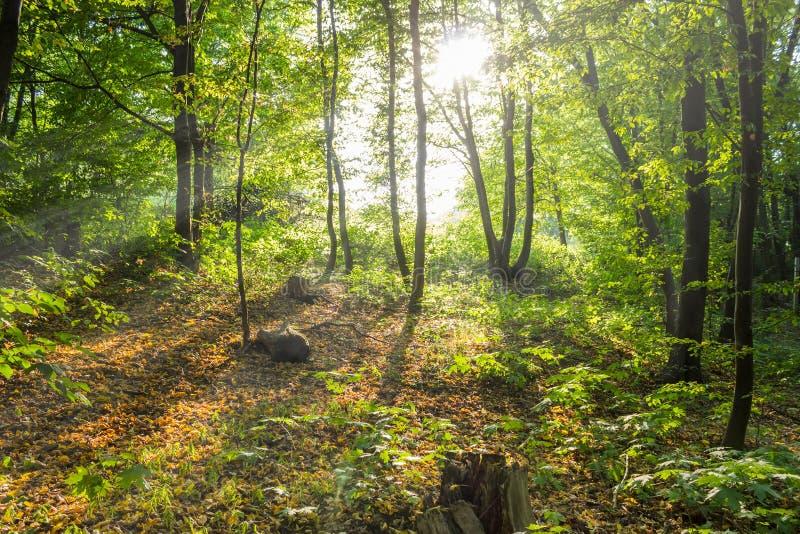 Árboles verdes iluminados por el sol, bosque del verano imagenes de archivo