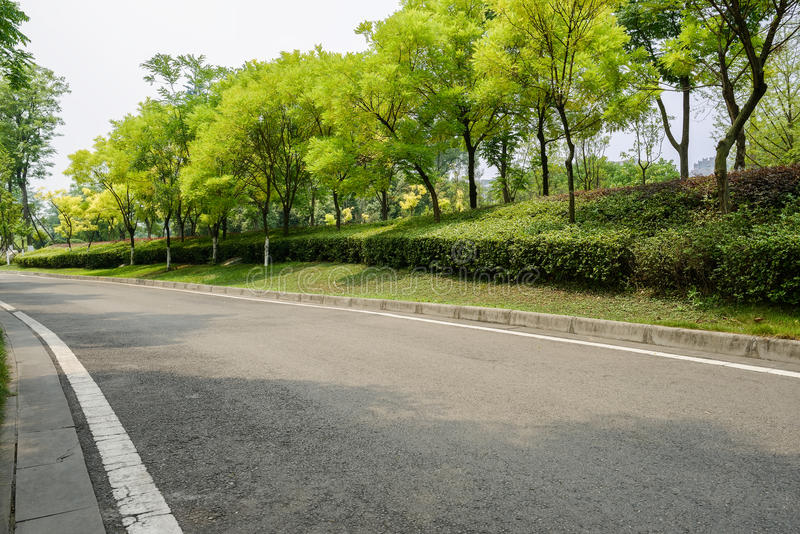 Árboles verdes por el camino del blacktop en verano soleado fotos de archivo