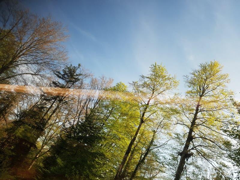 árboles. Viaje, primavera, colorido, diversión royalty free stock images