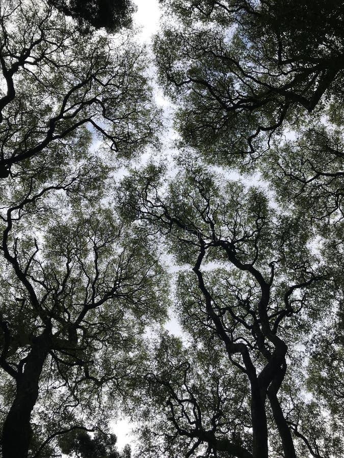 Árboles, visión ascendente imagenes de archivo