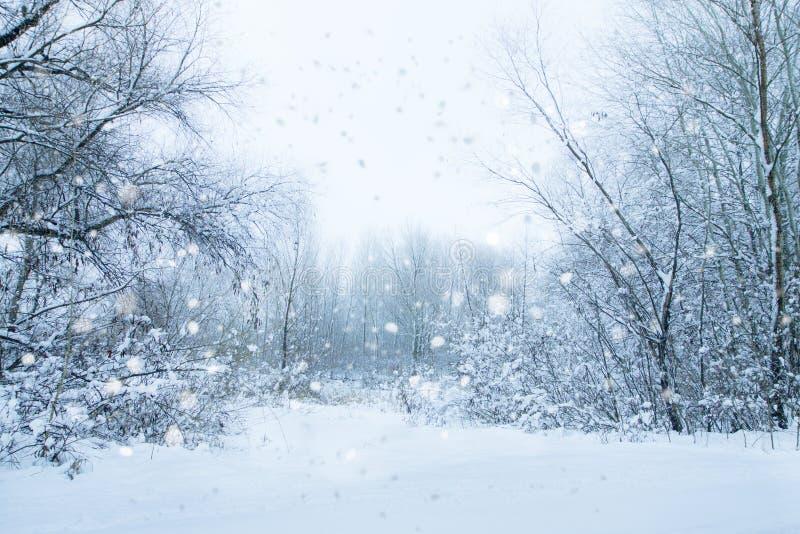 Árboles y arbustos blancos Día reservado de la nieve en un paisaje del invierno de la calma del bosque foto de archivo libre de regalías