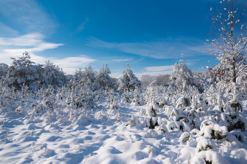Árboles y arbustos cubiertos con nieve fotos de archivo
