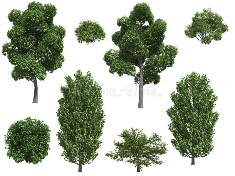 Árboles y arbustos de álamo ilustración del vector